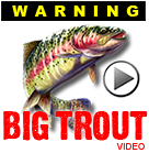 Big Trout video!